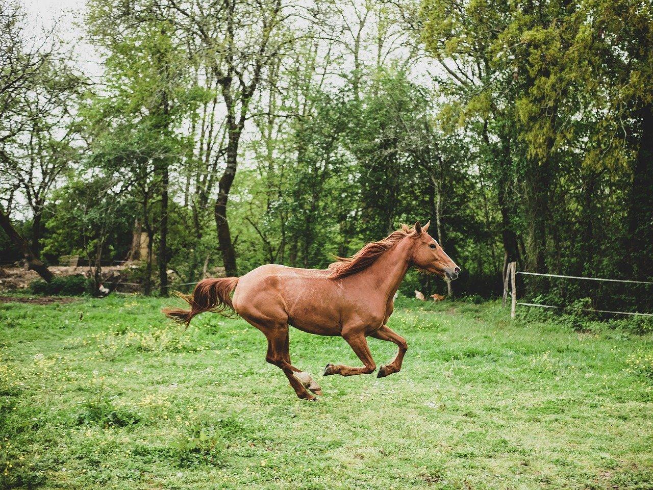You are currently viewing Les différentes races de chevaux de course